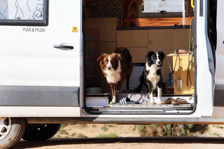 Vanlife mit Hund