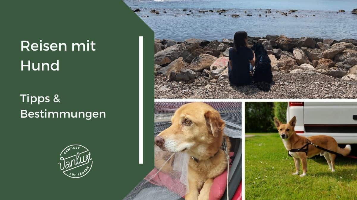 Reisen mit Hund - Tipps & Bestimmungen
