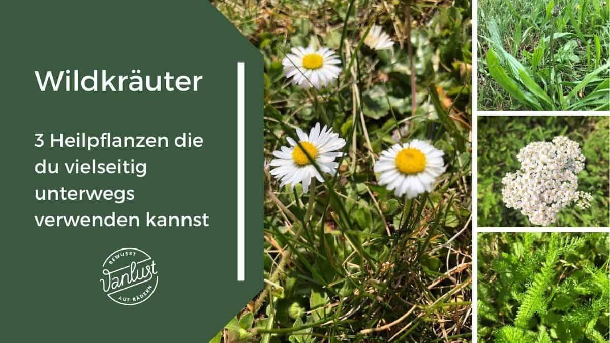 Wildkräuter - 3 Heilpflanzen die du vielseitig unterwegs verwenden kannst